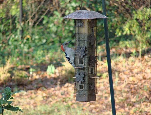 Woodpecker Nourishing Birdhouse Feeding Hanging An