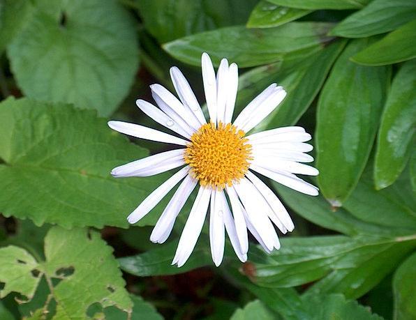 Flower Floret Landscapes Countryside Nature Plant