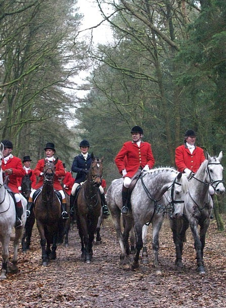 Hunting Shooting Cattle Drag Slog Horses Bos Autum