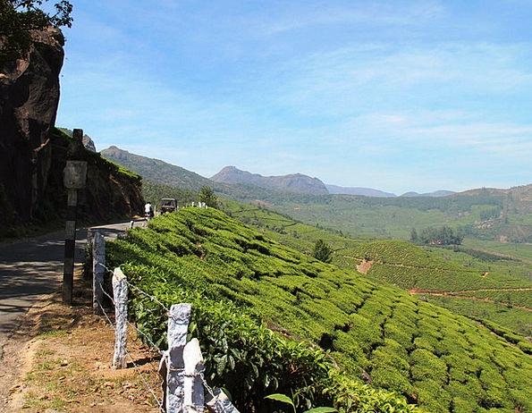 Tea Plantation Landscapes Nature India Tea Cultiva