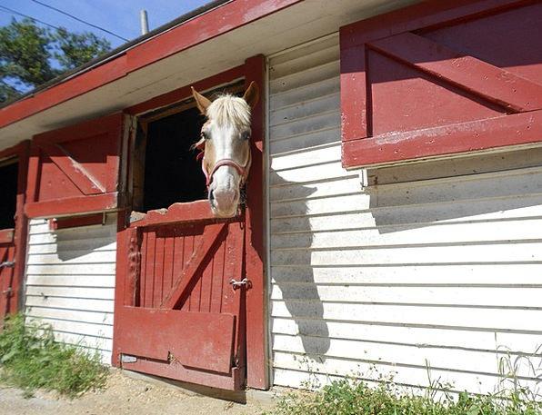 Horse Mount Animal Physical Horse Head Bridle Barn