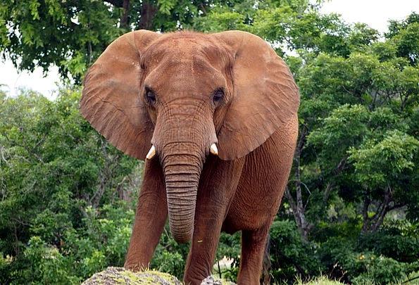 African Bush Elephant Monster Animal Physical Elep