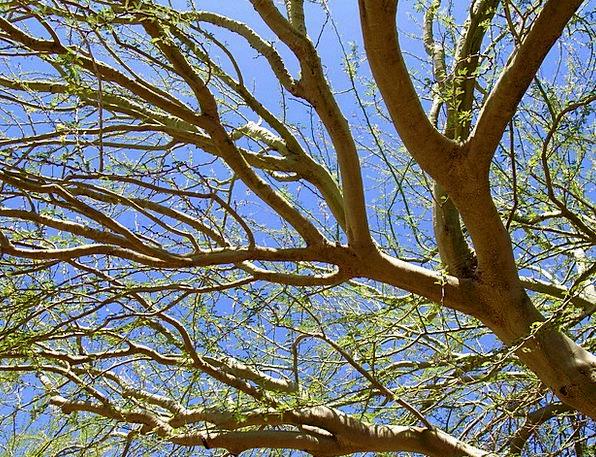 Tree Sapling Landscapes Lime Nature Phoenix Green