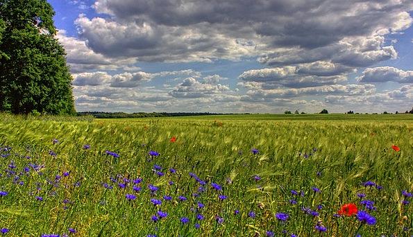 Brandenburg Landscapes Arena Nature Nature Country