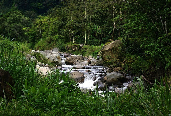 Stream Watercourse Landscapes Nature Water Aquatic