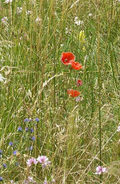 Pre Landscapes Arena Nature Poppy Field Prairie St