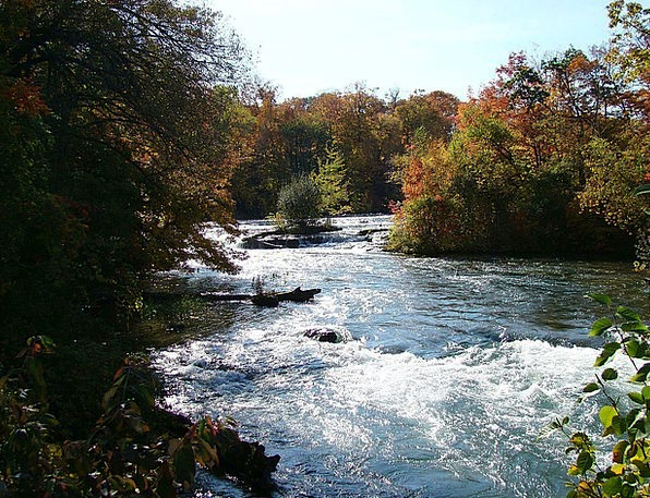 Autumn Landscapes Reduction Nature Tree Sapling Fa