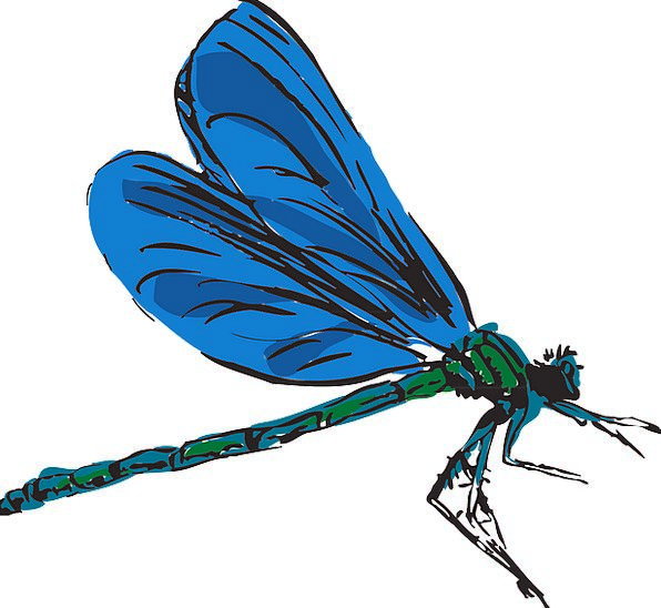 Dragonfly Hovering Wings Annexes Flying Insect Bug