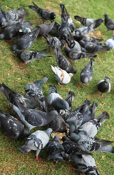 Animal Physical Fowl Birds Natures Bird Group Dove