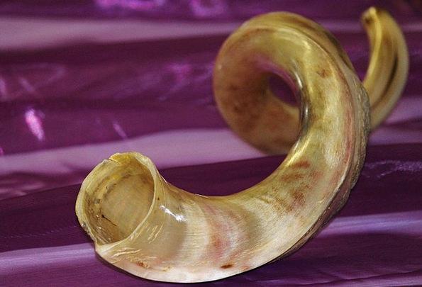 Horn Siren Musical Instrument Antelope Africa