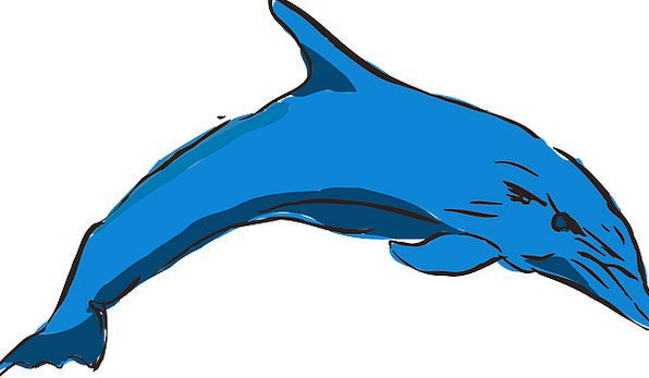 Dolphin Vacation Azure Travel Ocean Blue Leaping J