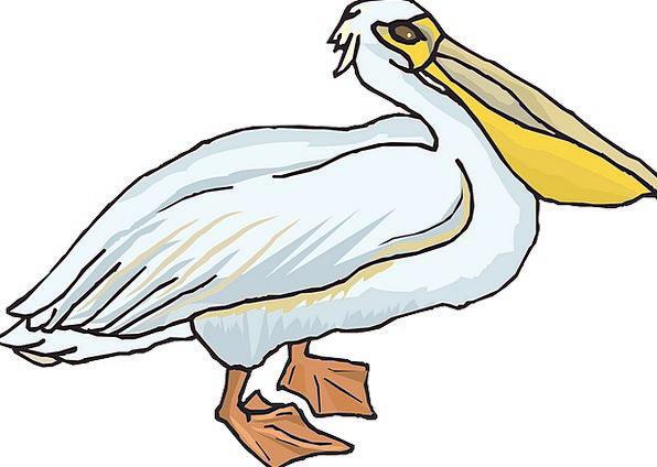 Pelican Pouch Bag Seabird Pelecanidae Pelecanus Er