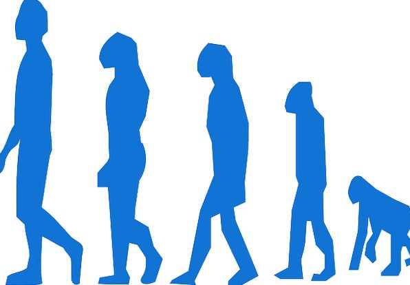 Evolution Development Ape Man Gentleman Monkey Cha