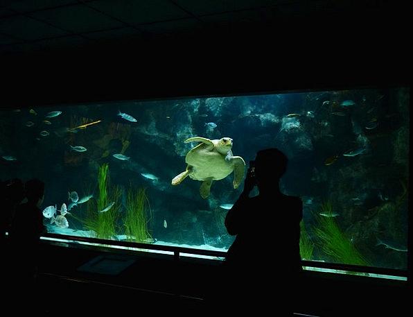 Aquarium Photographer Paparazzo Sea Turtle Recordi