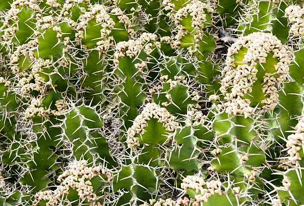Cactus Landscapes Vegetable Nature Pattern Design