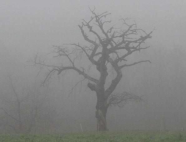 Fog Mist Landscapes Sapling Nature Colourless Tree