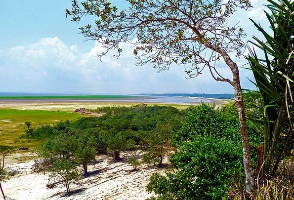 Amazon Forest Water Aquatic Rainforest Flora Veget