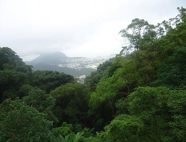 Rio De Janeiro Lime Corcovado Green Brazil
