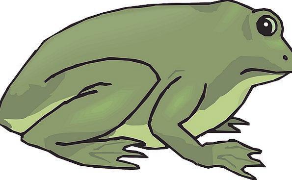 Frog Landscapes Nature Tropical Hot Amphibian Ecol