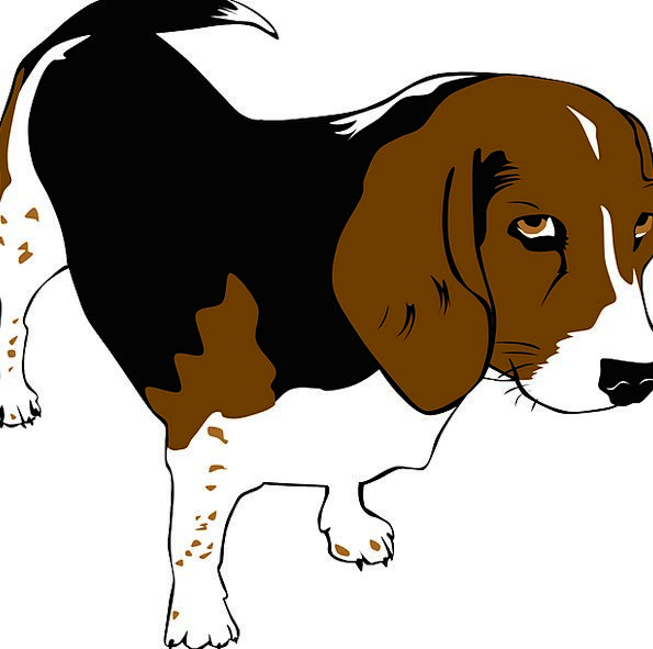 Beagle Animals Faunae Dog Pedigree Pet Domesticate