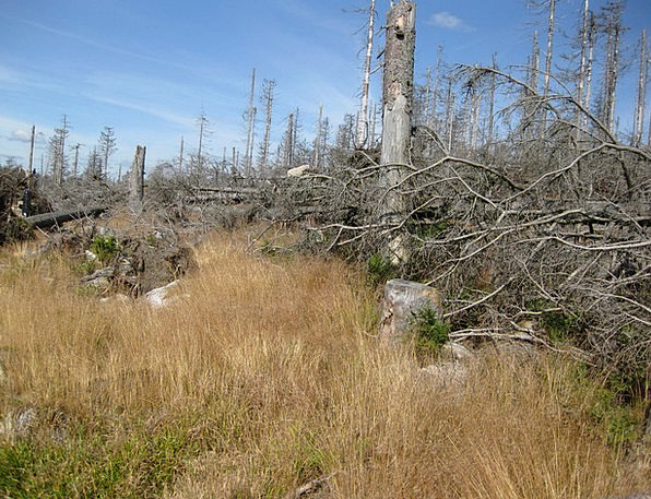 Dying Tree Landscapes Nature Dead Plant Dead Wood