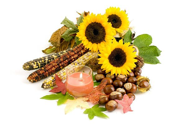 Sunflower Conker Sunflowers Fall Conkers Dry Corn