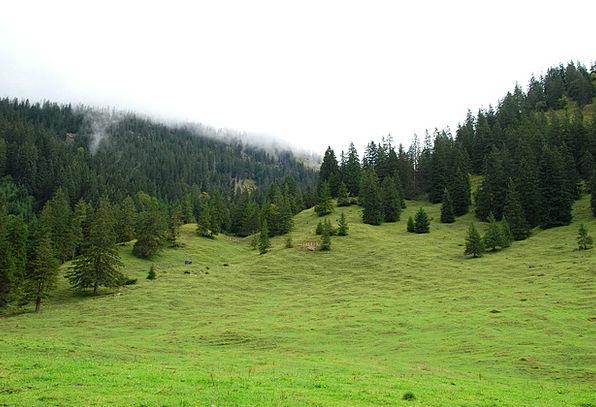 Allgäu Landscapes Field Nature Trees Plants Meadow