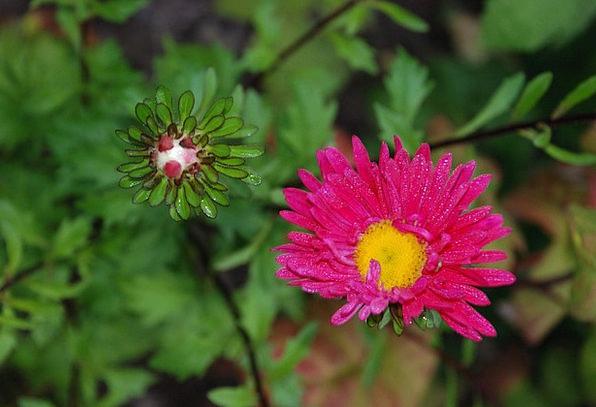 Flower Floret Landscapes Sprout Nature Pink Flushe