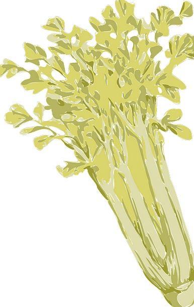 Celery Landscapes Potatoes Nature Green Lime Veget