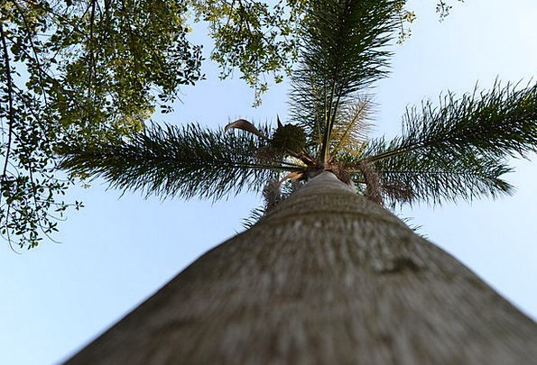 Tree Sapling Landscapes Tribute Nature Nature Coun