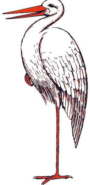 Stork Fowl Beak Bill Bird Red Bloodshot Standing W
