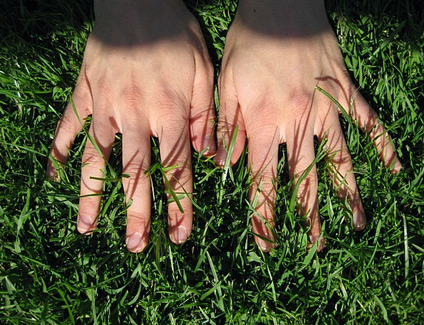 Hand Pointer Pointers Grass Lawn Hands Finger Digi