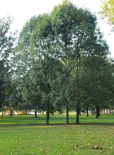 Trees Plants Common Main Banks Park Main Meadows M