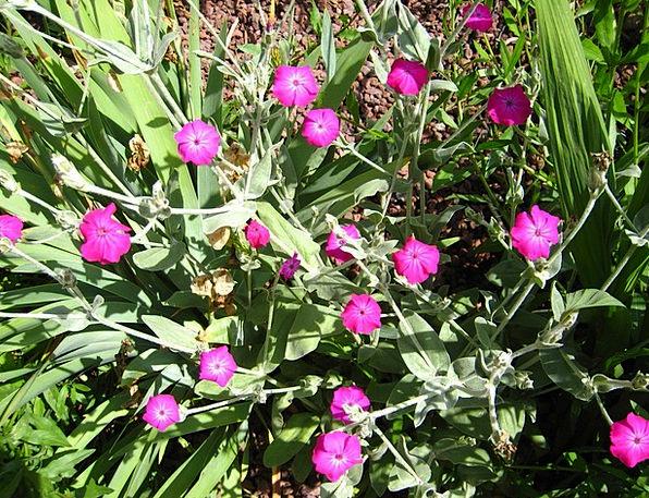Cloves Pieces Landscapes Vegetable Nature Flowers