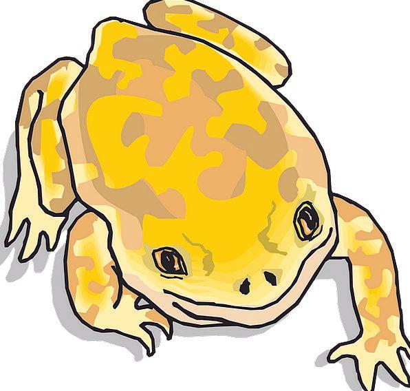 Frog Landscapes Nature Tropical Hot Amphibian Ecos
