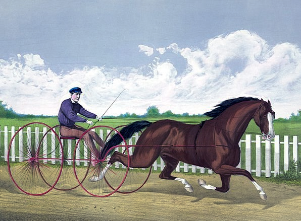 Horse Mount Jogging Buggy Trotting Painting Racer