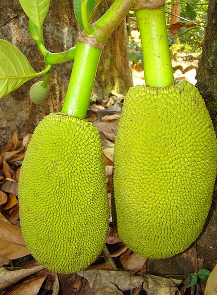 Jackfruit Drink Ovary Food Green Lime Fruit Food N