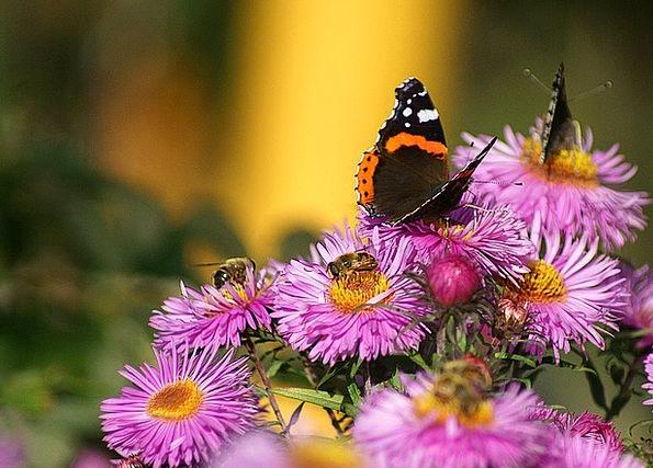 Butterflies Nerves Craft Industry Flowers Plants F