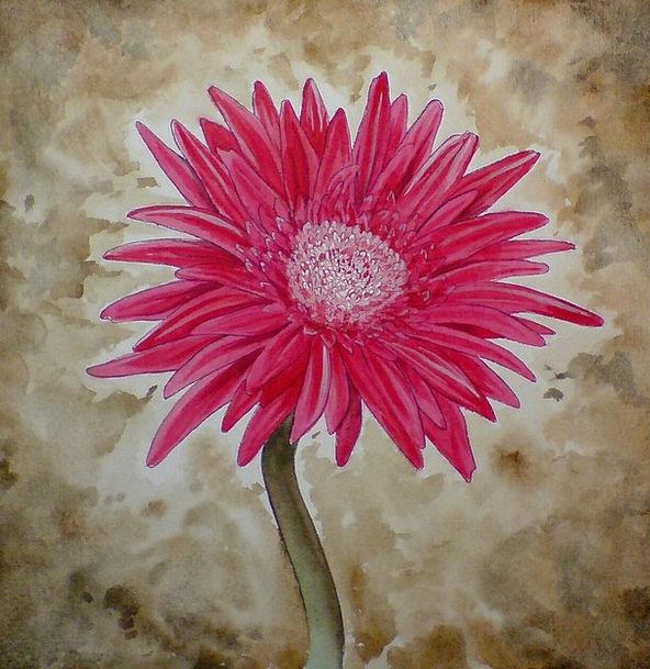 Gerbera Floret Pink Flushed Flower Painting Image