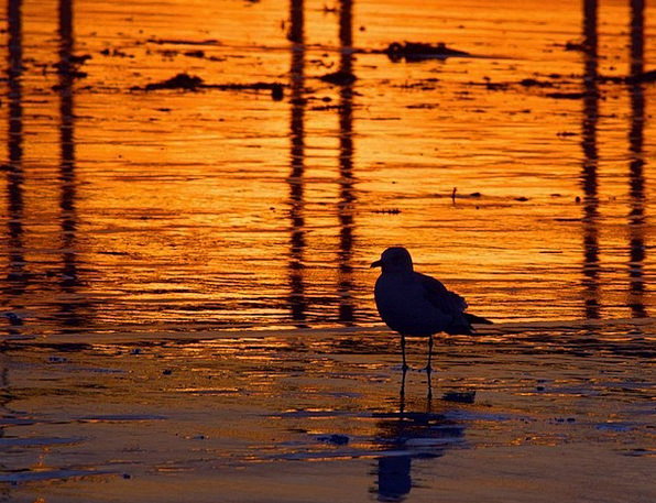 Gull Vacation Sundown Travel Coast Shore Sunset Re