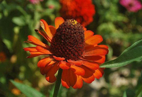 Zinnia Floret Petals Flower Macro Instruction