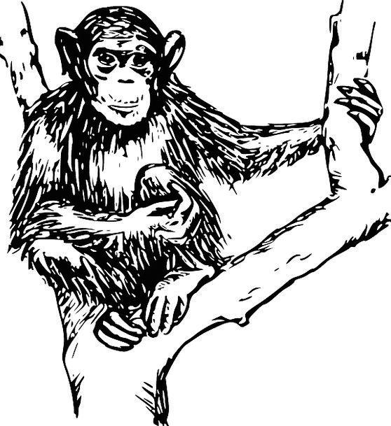 Chimpanzee Ape Physical Mammal Animal Creature Pri