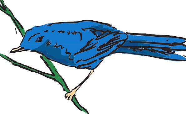 Blue Azure Fowl Wings Annexes Bird Stem Stalk Feat
