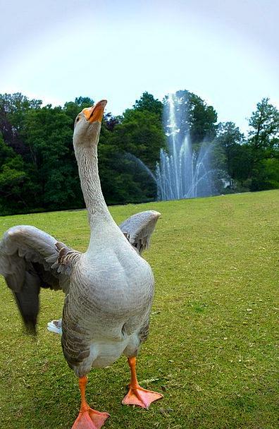 Goose Cascade Dancing Bopping Fountain Merry Happy