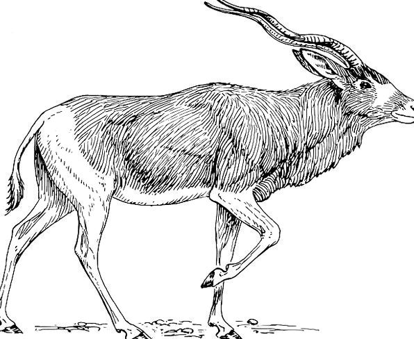 Antelope Horns Sirens Antlers Walking Free Vector