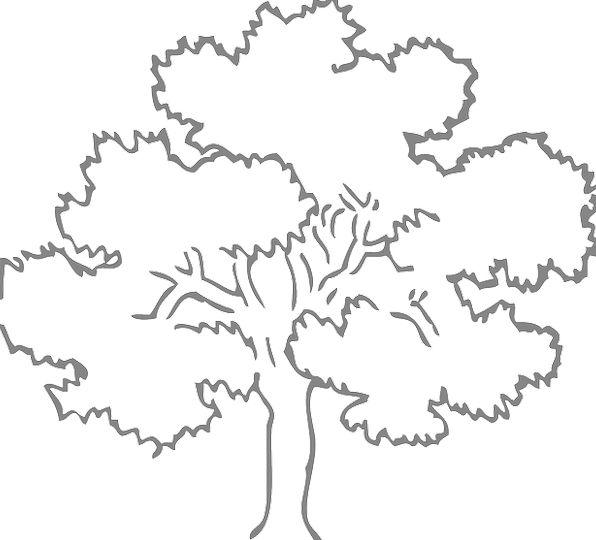 Oak Landscapes Sapling Nature Grey Old Tree Outlin