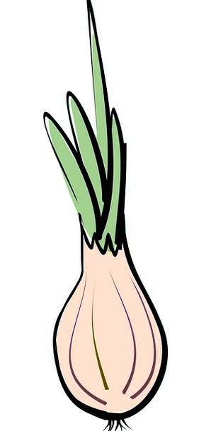 Onion Medical Health Vegetables Potatoes A Vegetab