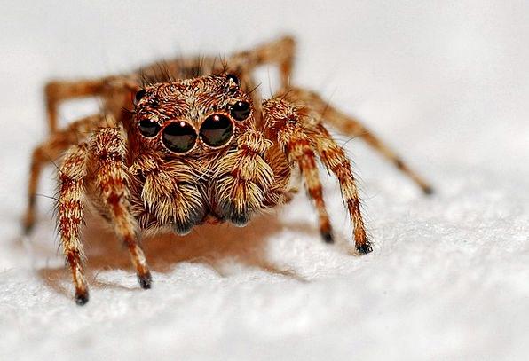Spider Instruction Insect Bug Macro Wildlife Arach