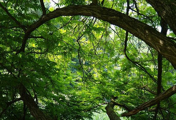 Tree Sapling Traffic Rainforest Transportation Gre