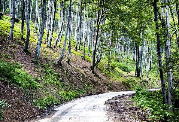 Tree Sapling Landscapes Countryside Nature Landsca